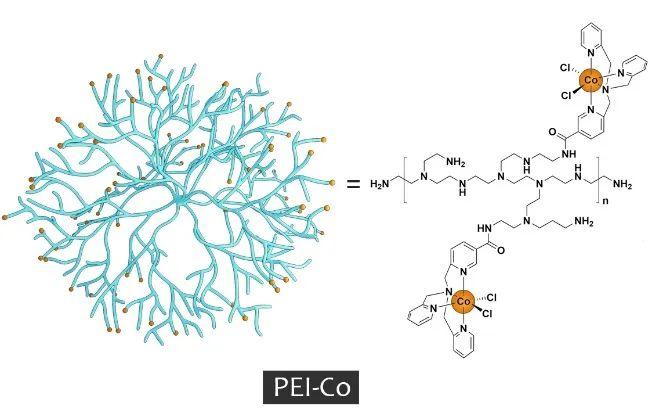 华中科技大学王锋《JMCA》:向大自然学习——仿生光合组装体实现可见光催化产氢性能提升