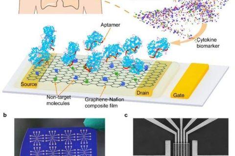 哈工大潘昀路教授团队:可在人类汗液中检测的柔性可再生石墨烯生物传感器