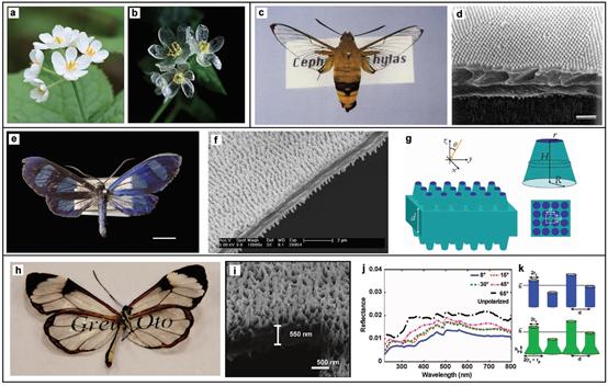 剑桥大学《先进材料》: 高手在民间,但是光学材料的制备高手在自然界