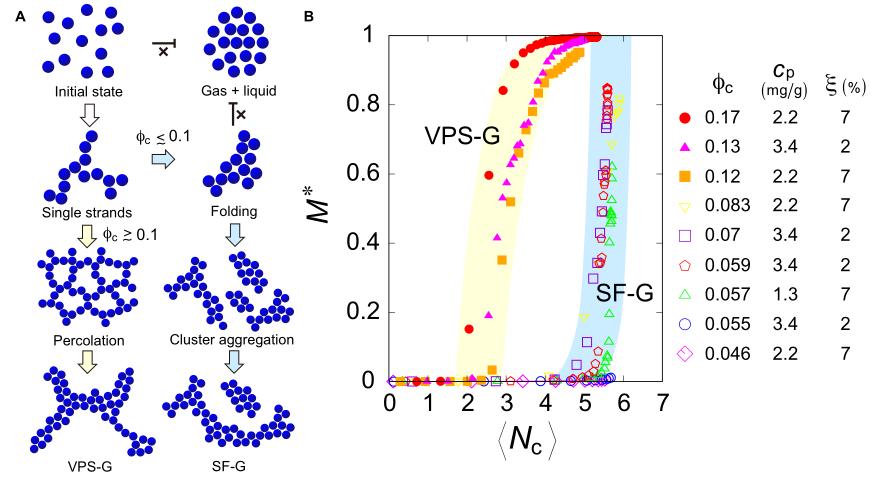 《Science》子刊: 发现一类新型凝胶,独特胶体相分离产生无应力凝胶