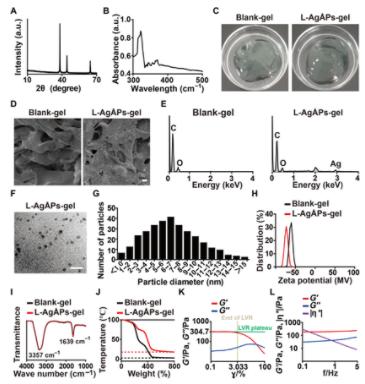 中南大学谢辉团队《Science》子刊:埃米银凝胶抗菌抗炎可促进皮肤修复再生