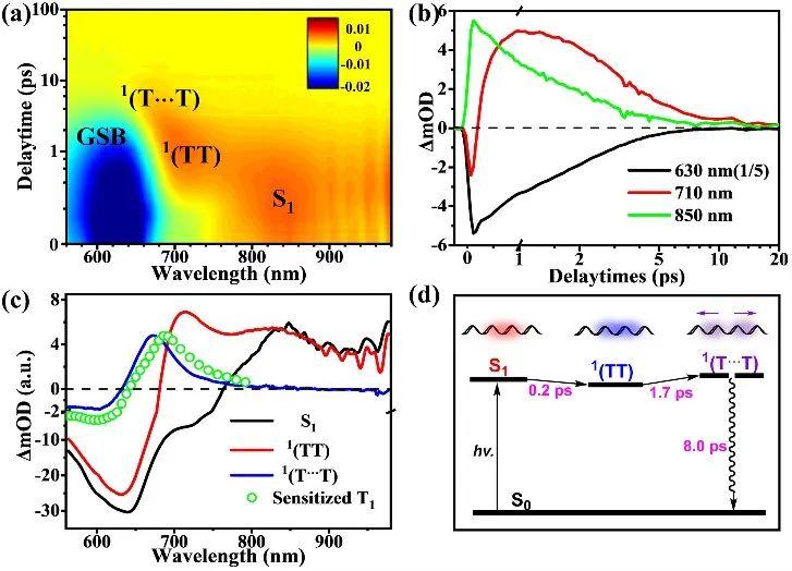太原理工大学王龙博士等《JACS》:醌式聚合物中的激子裂分现象