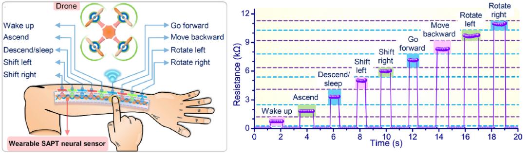 南洋理工大学郑元谨教授等研制出可拉伸、变形不敏感仿生触摸定位传感器