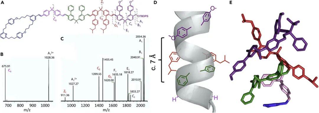 """英国曼彻斯特大学Leigh院士《Chem》:分子机器精准""""生产""""单序列低聚物"""
