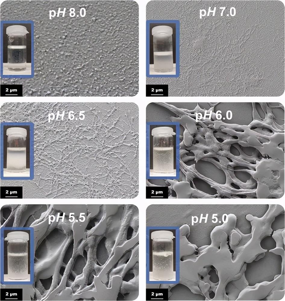 《Biomacromolecules》自组装3D 纤维蛋白原水凝胶和气凝胶-3