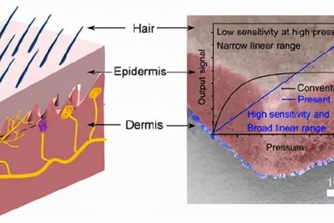 应化所王振新/广州大学牛利:高灵敏度气凝胶电子皮肤